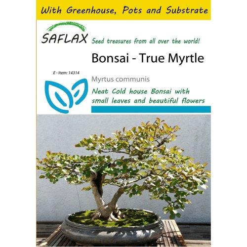Saflax Potting Set - Bonsai - True Myrtle - Myrtus Communis - 30 Seeds - with Mini Greenhouse, Potting Substrate and 2 Pots