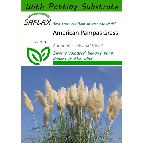 Saflax  - American Pampas Grass - Cortaderia Selloana `silber` - 200 Seeds - with Potting Substrate for Better Cultivation