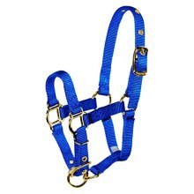 Hamilton Adjustable Miniature Nylon Horse Halter