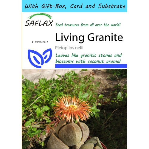 Saflax Gift Set - Living Granite - Pleiopilos Nelii - 40 Seeds - with Gift Box, Card, Label and Potting Substrate