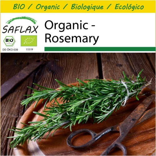 SAFLAX Potting Set - Organic - Rosemary - 40 certified organic seeds  - Rosmarinus