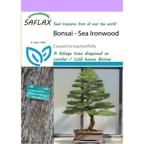 Saflax  - Bonsai - Sea Ironwood - Casuarina Equisetifolia - 200 Seeds