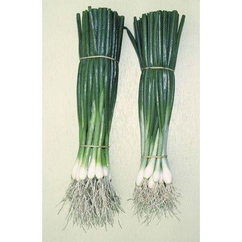 Vegetable - Salad Onion - Guardsman - 175 Seeds