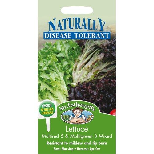 Mr Fothergills - Pictorial Packet - Vegetable - Lettuce Multired & Multigreen - 200 Seed