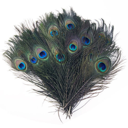 Real Peacock Feathers for Natural Decoration, Arts and Crafts, Home Decoration