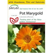 Saflax Potting Set - Pot Marygold - Calendula Officinalis - 50 Seeds - with Mini Greenhouse, Potting Substrate and 2 Pots