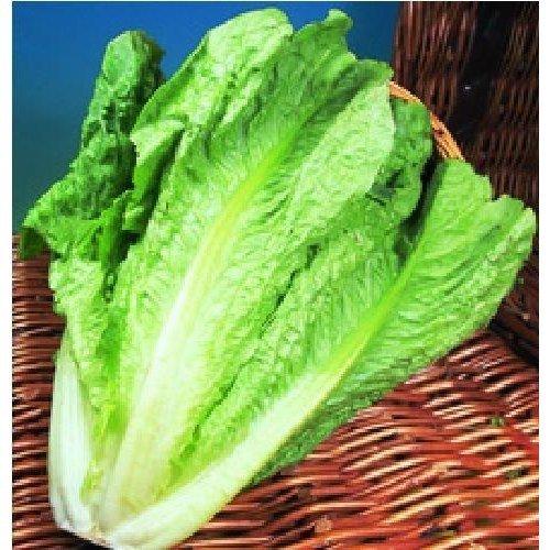 Vegetable - Lettuce - Lobjoits Green - 500 Seeds
