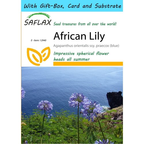 Saflax Gift Set - African Lily - Agapanthus Orientalis Ssy. Praecox (blue) - 50 Seeds - with Gift Box, Card, Label and Potting Substrate