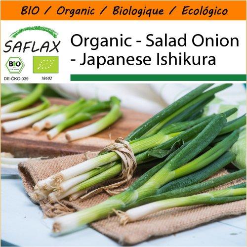 SAFLAX Garden in the Bag - Organic - Salad Onion - Japanese Ishikura - 150 certified organic seeds  - Allium