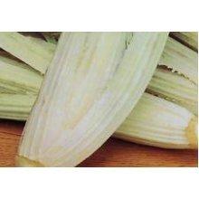 Vegetable - Artichoke - Cardoon - Bianco Avorio - 150 Seeds