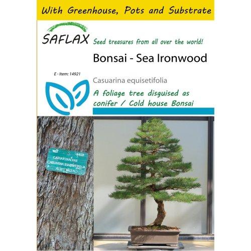 Saflax Potting Set - Bonsai - Sea Ironwood - Casuarina Equisetifolia - 200 Seeds - with Mini Greenhouse, Potting Substrate and 2 Pots