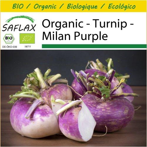 SAFLAX Potting Set - Organic - Turnip - Milan Purple - 600 certified organic seeds  - Brassica