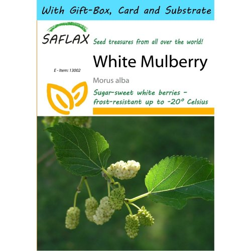 Saflax Gift Set - White Mulberry - Morus Alba - 200 Seeds - with Gift Box, Card, Label and Potting Substrate
