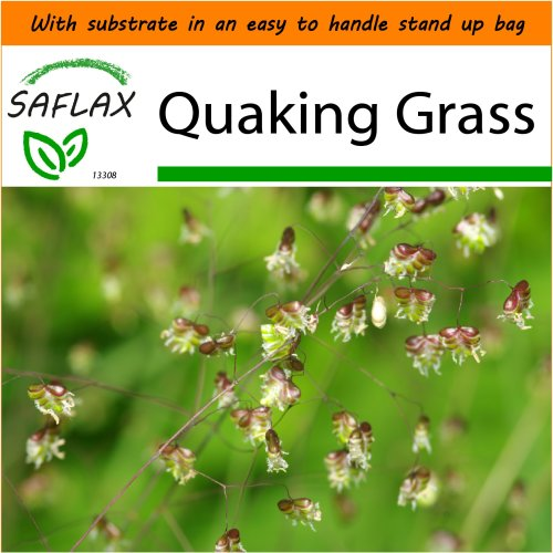 SAFLAX Garden in the Bag - Quaking Grass - Briza media - 75 seeds - With substrate in a fitting stand up bag.