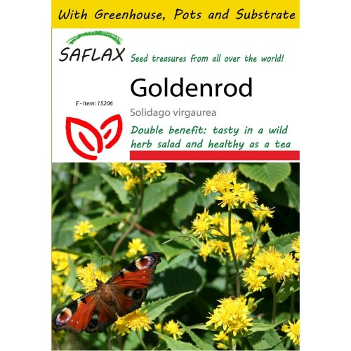 Saflax Potting Set - Goldenrod - Solidago Virgaurea - 100 Seeds - with Mini Greenhouse, Potting Substrate and 2 Pots