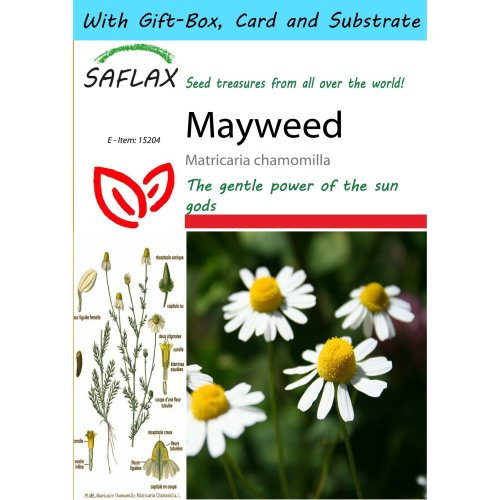 Saflax Gift Set - Mayweed - Matricaria Chamomilla - 300 Seeds - with Gift Box, Card, Label and Potting Substrate