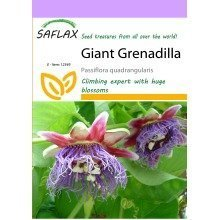 Saflax  - Giant Grenadilla - Passiflora Quadrangularis - 12 Seeds
