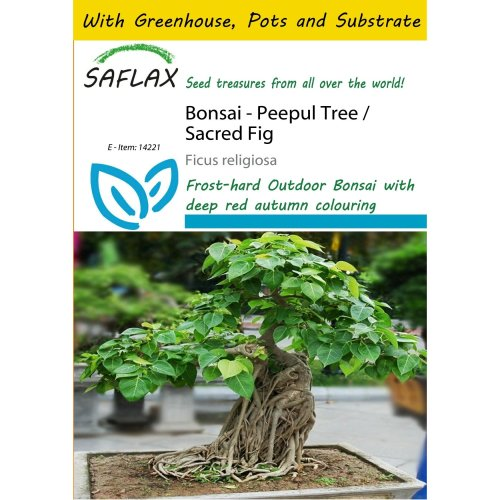 Saflax Potting Set - Bonsai - Peepul Tree / Sacred Fig - Ficus Religiosa - 100 Seeds - with Mini Greenhouse, Potting Substrate and 2 Pots